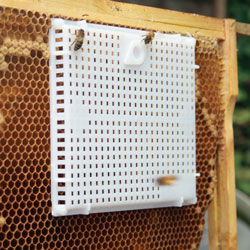 Queen Bee Introduction Cage
