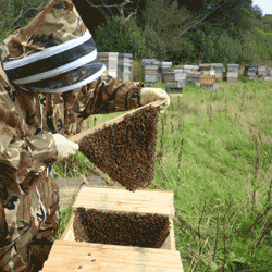 Beekeeping Course, Beginners Practical (per person)