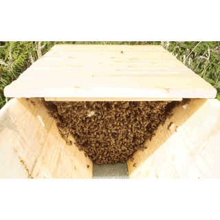 Cornish Top Bar Hive | Heather Bell Honey Bees, Beekeeping ...